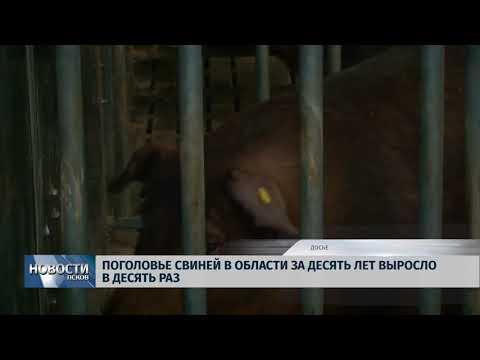 Новости Псков 19.09.2018 # Поголовье свиней в области выросло в десять раз за десять лет