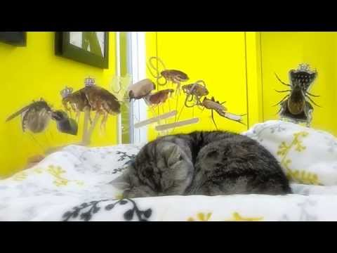 Linoculation pour les chats des helminthes et les puces
