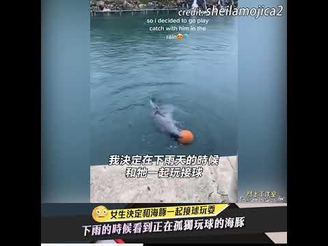 下雨的時候看到正在孤獨玩球的海豚