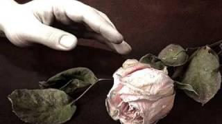 The Last Rose of Summer - Richard Bonsall