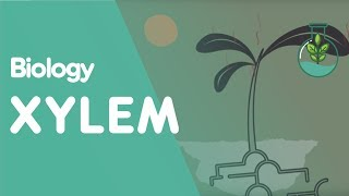 Xylem and Phloem - Part 2 - Transpiration - Transport in Plants | Biology | FuseSchool