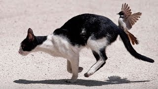 What can possibly BE FUNNIER than THESE AMAZING ANIMALS? - Funny ANIMAL compilation