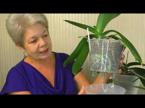 Как поливать Орхидеи ОСЕНЬЮ и ЗИМОЙ? СЕКРЕТЫ ПОЛИВА 😊, когда Дома ЖАРКО и СУХО или ВЛАЖНО и ХОЛОДНО.