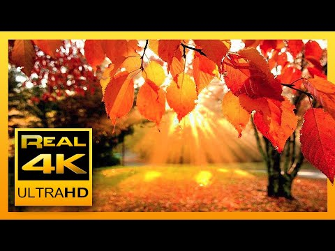 4K Autumn Forest & Relaxing Piano Music - Beautifull Fall Leaf Colors in 4K UHD - 2 Hours