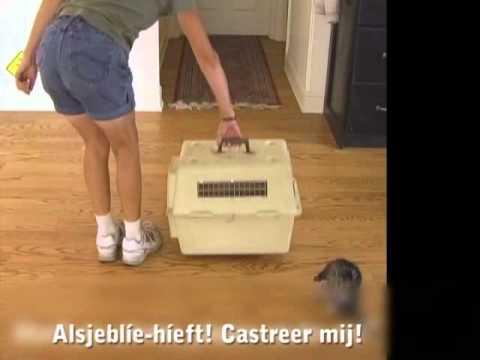 Sterilisatie/Castratie actie 2014
