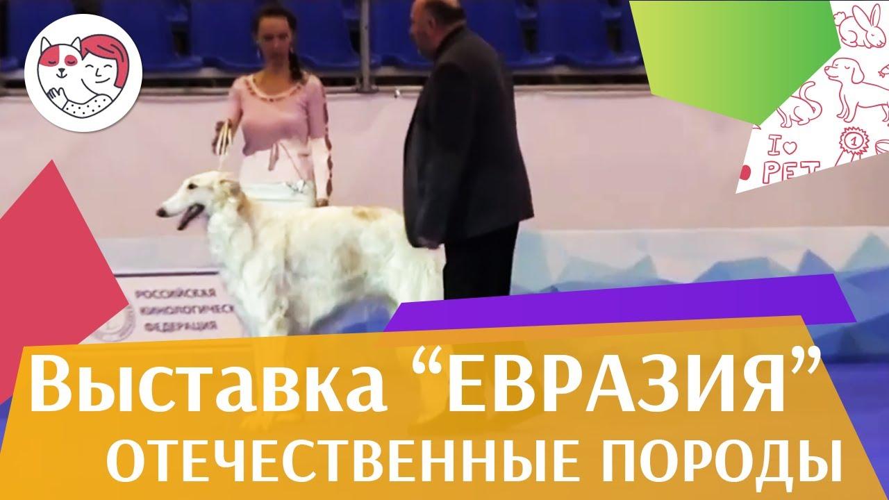 Конкурс собак отечественных пород 19 03 17 на Евразии ilikepet