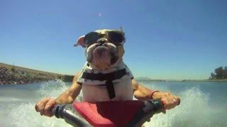Собаки-лучшие моменты. Лучшее видео про собак!!!