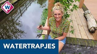 Chantal pleit voor het plaatsen van watertrapjes om dieren te redden - OMROEP WEST