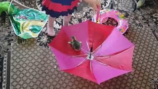 ТОП Прикол. Ребенок и гуся играют