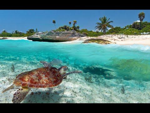 10 Things To Do In Playa Del Carmen