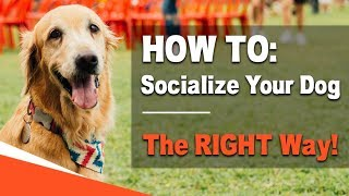 How to Socialize Your Dog - The RIGHT Way