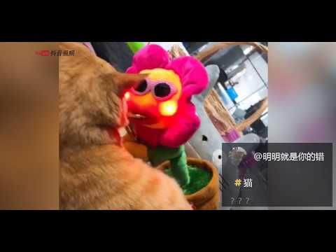 【抖音】動物成精系列 TIK TOK 2018最新動物搞笑視頻合集 (5) 萌寵 超級可愛