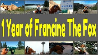 1 Year of Francine The Fox