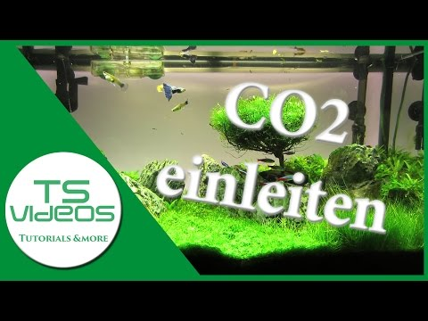 CO2 ins Aquarium einleiten - Weche Methoden gibt es? - TSVideos