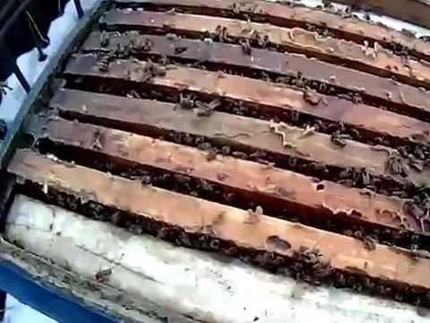 Пчеловодство. Даю медовые рамки пчелам зимой 07.01.2017| Спасение семьи