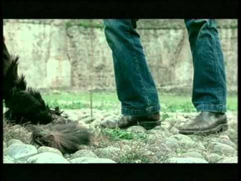 The Living World / Le Monde vivant (2003) - Trailer