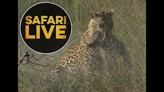 safariLIVE - Sunrise Safari - May, 26. 2018