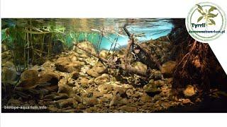 600l Akwarium biotopowe. Strumień Zen - Wlochy