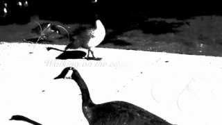Scorpions - walking on the edge