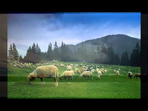 Luca Novac – Doina oilor