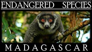 Endangered Species in Madagascar