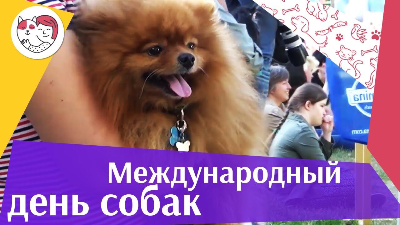 Международный день собак на ilikepet