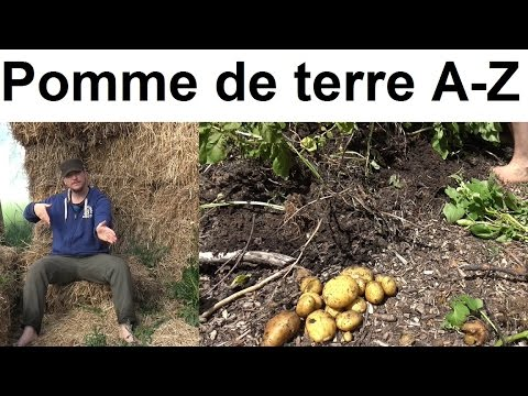 , title : 'Pommes de terre A à Z  (presque)