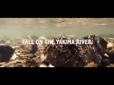 Fall trout spey on the Yakima River