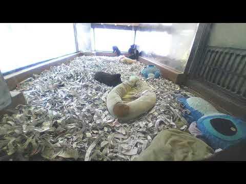 阿蘇カドリー・ドミニオン 赤ちゃんぐまの部屋