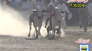 SODA of Kajla Chatra of Qurbani Eid 2018 - SARGODHA KAJLA