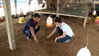 Tin Tức 24h Mới Nhất: Kon Tum liên tiếp phát hiện gỗ lậu vô chủ