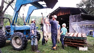 Butchering 5 Pigs + a Steer On Farm (In a Day)