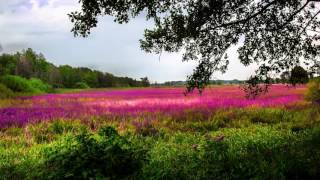 Relaxing Piano Music: Concentrate, Meditation, Study, Massage, Peaceful Mind