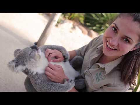 These Extra Cute Koala Moments Would Make Anyone Smile