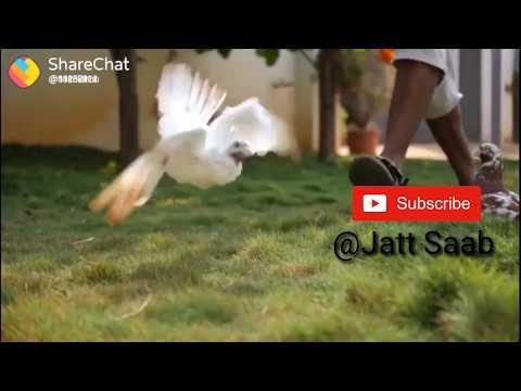 job-ਜੂਬ ਨੀ ਜੱਟਾਂ ਦਾ ਪੁੱਤ ਭਾਲਦਾ New punjabi