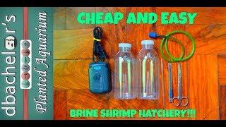 How To | DIY Brine Shrimp Hatchery