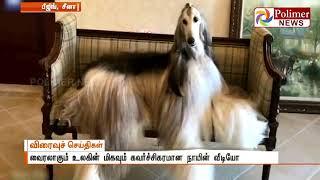 வைரலாகும் உலகின் மிகவும் கவர்ச்சிகரமான நாயின் வீடியோ