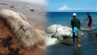 Makhluk Misterius Raksasa Terdampar di  Pantai Filipina, Warga Anggap Pertanda Bencana