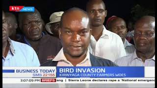 Government deploys aeroplane to spray and kill birds in Mwea