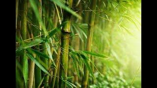 Mi Köze A Bambuszfának A Sikerhez? Több, Mint Gondolnád.