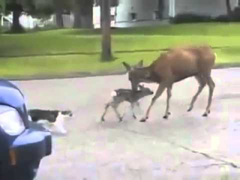 Ghetto Deer Beats Up Dog!!