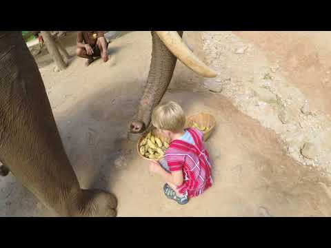 Patara Elephant Farm - Smiths 2018