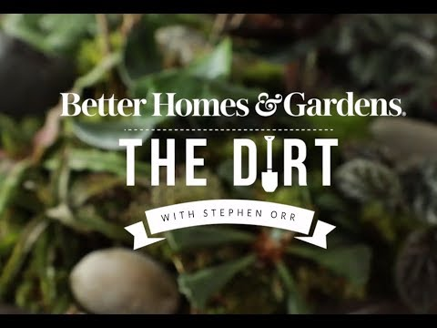 Wet and Dry Dish Gardens | The Dirt | Better Homes & Gardens