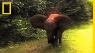 Elephant - Encounter with Humans