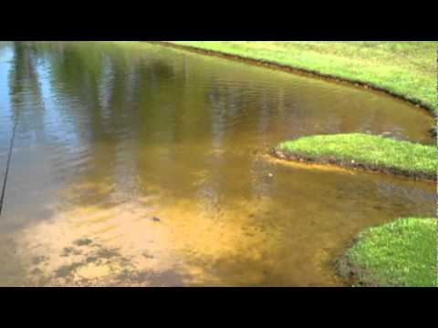 Largemouth Bass Fishing With Frogs