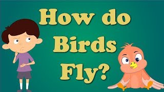 How Do Birds Fly For Children   #aumsum