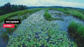 FPV Kerala Paddy Fields   എന്റെ നാട് HD  