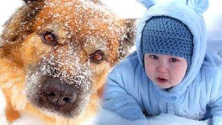 Пёс Шарик бросился под машину - чтобы спасти малыша, которого мама забыла на дороге...