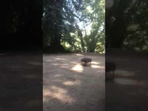 Video Of Parker's Resort, CA