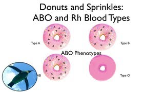 Blood Types:  ABO and Rh (with donuts and sprinkles!)
